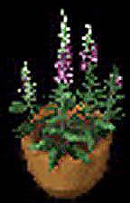 foxglove-altered.jpg